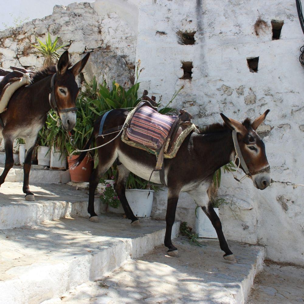 Balaam Donkey